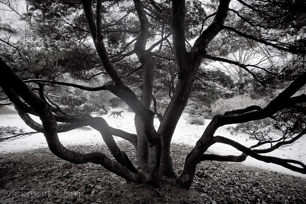 Boston fine art photography at the Arnold Arboretum.