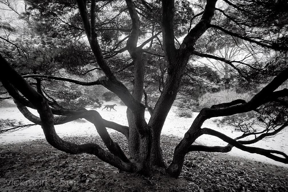 Boston fine art photography at the Arnold Arboretum.